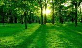 Culoarea verde, simbol și semnificație
