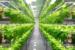 Agricultura viitorului fără sol și cu un consum redus de apă